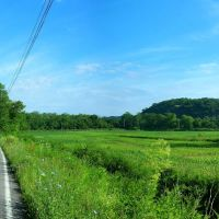 Fields near Huntingdon and Raystown, Хантингдон