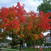 October in full Glory, Хантингдон