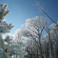 Iced Trees, Швенксвилл