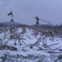 Fresh Snow, Экономи