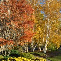 Autumn Blaze, Эри