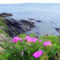 view of Narragansett Bay, Beavertail State Park, Beavertail Rd, Jamestown, RI 02835, Миддлтаун