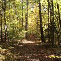 White Pines Nature Preserve