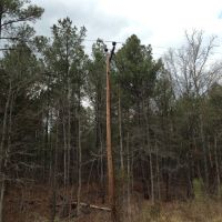 50s or 60s Era Pole and Pines, Вильсон