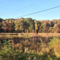 Beaver pond, Горман