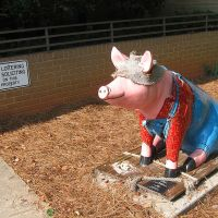 Pig At Davidson Co. Library, Lexington, NC, Давидсон