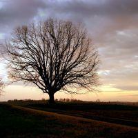 Solo Tree, Давидсон