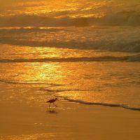 Topsail Beach, NC, Джексонвилл