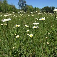 Spring Flowers, Индиан-Трейл