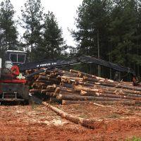 Pine Logging, Кливленд