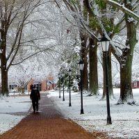 Winter Walk, Корнелиус