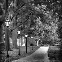 Sidewalk, Корнелиус