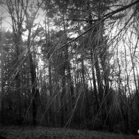My Woods, Маунтайн-Хоум