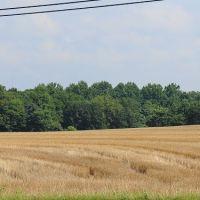 crop circles, Норт-Конкорд