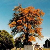 Graveyard Sentinal, Ньютон