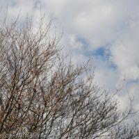 EBHS Tree1, Родхисс