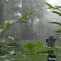 Back Yard Fog, Сталлингс
