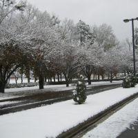 December 2010 Snow, Уайтвилл