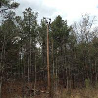 50s or 60s Era Pole and Pines, Хадсон