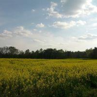 Happy Spring!, Хантерсвилл