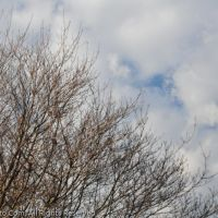 EBHS Tree1, Хилдебран