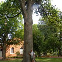 Post Oak Tree, UNC Campus, Chapel Hill NC, Чапел-Хилл