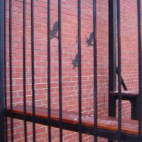 Caged Birds, Чапел-Хилл
