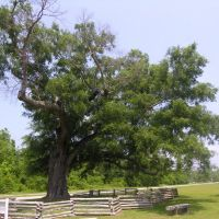 The Old Oak of Camden, Эллерб