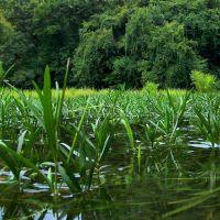 Vegetation in the Deep River, Эллерб