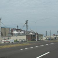 Silos west of Dyersburg, Аламо
