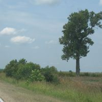Tree along 45W, Аламо