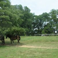 Western Kentucky horses, Аламо