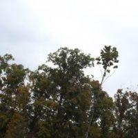 Huge cross near I-40 in Cookeville, TN, Алгуд