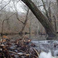 Beaver Dam on Beaver Dam Creek  crazy!, Бентон