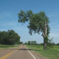 Interesting tree on George Gracey highway, Брадфорд
