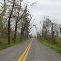 Ice storm Damage in Graves County KY, Глисон
