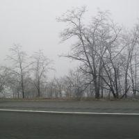 Ice Trees, Джеллико