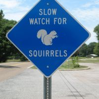 Watch for White Squirrels, Кентон