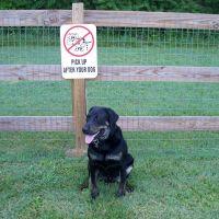 kingston springs dog park, Кингстон-Спрингс
