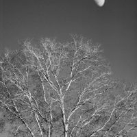 Moon over Tree, Колумбиа