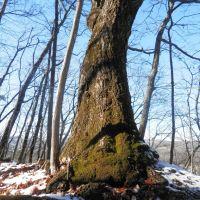 Rocky Cut tree, Кросс Плаинс