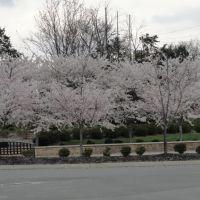Spring in TN, Ла Вергн