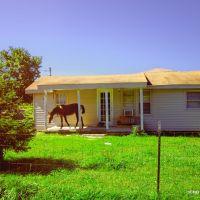 Tennessee Porch Horse 2, Манчестер