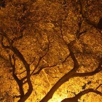 Tree at Night, Мемфис