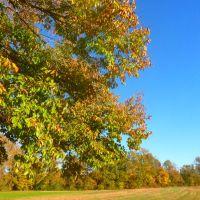 Fall Colors, Миллингтон