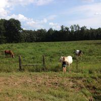 Horses in field, Моррисон