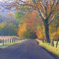 Fall Straight Ahead, Ниота