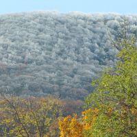 white blanket of frost, Blue Ridge Mountains..North Georgia , near Blairsville , Ga.   late October, 2011, Ниота