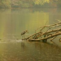 Fishing, Рокфорд