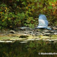 Murfreesboro Greenway Wildlife, Рутерфорд
